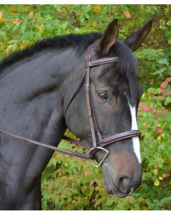 Fancy Raised Padded Cyprus Bridle with Padded Crown and Fancy Laced Reins